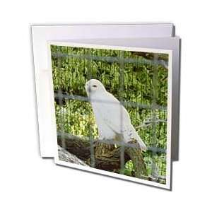 Edmond Hogge Jr Birds   White Owl   Greeting Cards 6