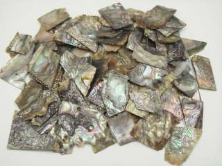 ASSORT LARGE ABALONE SHELL BLANK INLAY MATERIAL 1 POUND #6001A