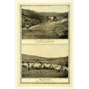 1910 Print Farm Animals Sheep Herd Goat Catalina Island