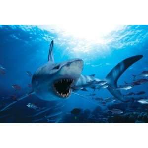 Hungry Shark   Poster (36x24): Home & Kitchen