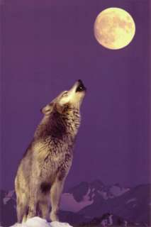 Gray Wolf Howling at Moon Poster at AllPosters