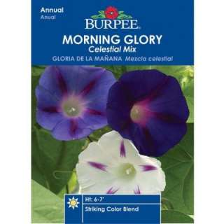 Burpee Morning Glory Celestial Mix Seed 32181 at The Home Depot