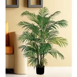 USA zeusd1 CALA 4270448 Areca Silk Palm Tree 4 Inch: Home & Kitchen