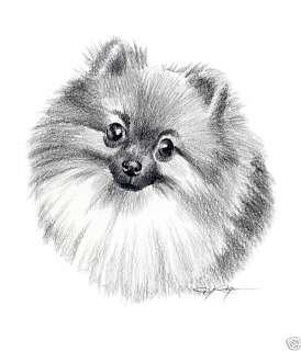 POMERANIAN Dog Drawing ART 13 X 17 LARGE Signed DJR